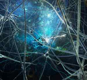 brain synapses with healthy transmission